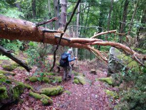 Wandern mit umgestürzten Bäumen